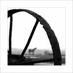 O koňském životě