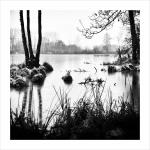 Olšový rybník